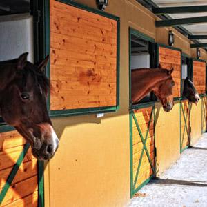 Horsebox finance for business