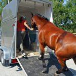 horse-trailer-loading