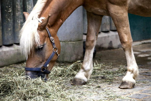 horse nutrition guide