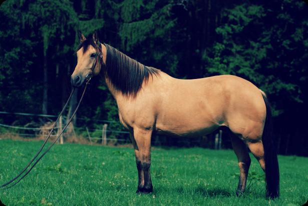 Horse Rugs, Horse Boots & Horsebox Finance