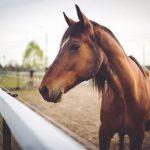 thorpe horseboxes